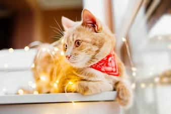 Katzen- und Weihnachtslichter. Nette Ingwerkatze, die nahe dem Fenster und dem Spiel mit Lichtern liegt.