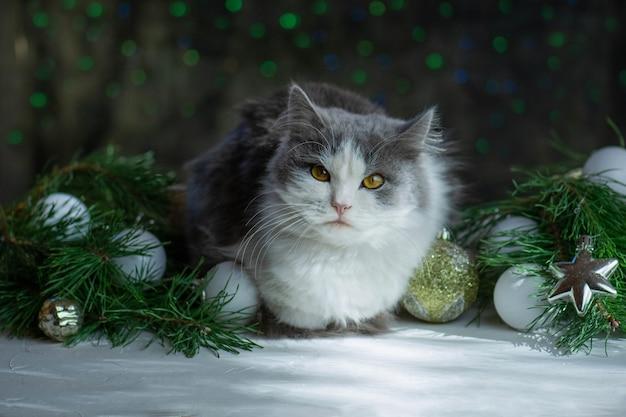 Katzen- und weihnachtsspielzeug mit bokehhintergrund der weihnachtsbeleuchtung