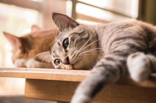 Katzen wollen gesichter machen.