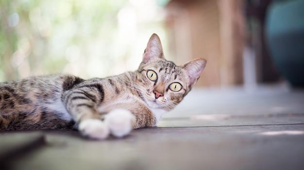 Katzenbaby-tatzenspielhaushaustier-miezekatzekatzenfutter-miezekatze, die den bart zuverlässig schaut