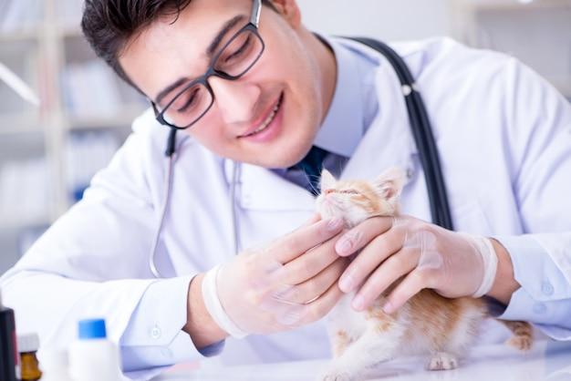 Katzenbesuchstierarzt für regelmäßige kontrolle