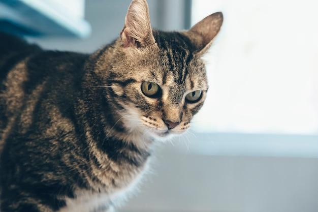 Katzenblick, entzückendes haustier, gesellschaft zu hause, katze am fenster