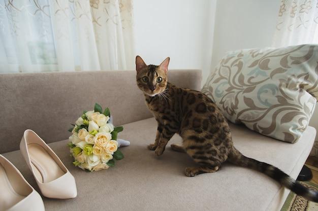 Katzenbraut mit blumenstrauß und schuhen