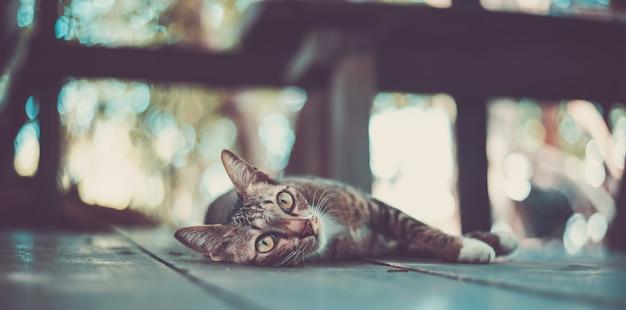 Katzenmiezekatze, die den bart zuverlässig schaut