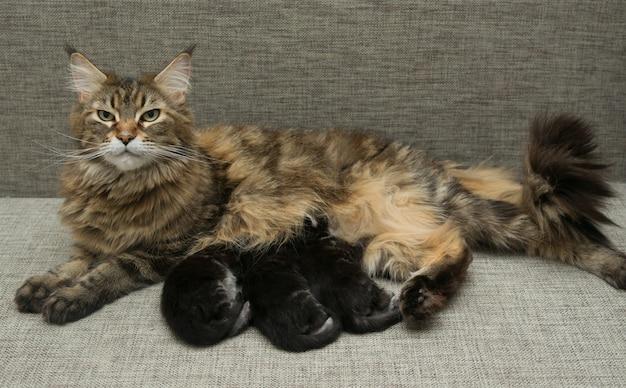 Katzenmilch füttert ihre kätzchen