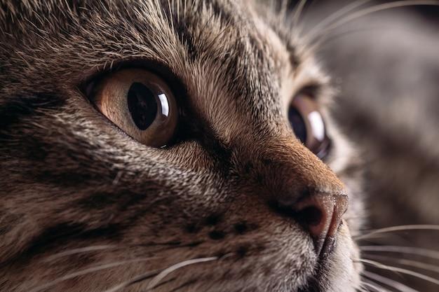 Katzenmündung nahaufnahme der augen im fokus