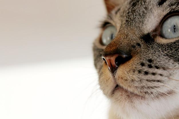 Katzennasenahaufnahme