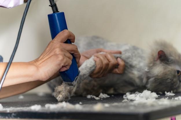 Katzenpflege, groomer haare schneiden der katze im beauty-salon für hunde und katzen