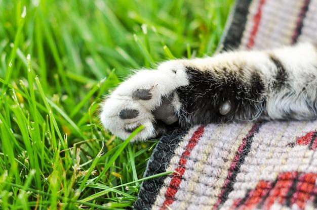 Katzenpfote gegen auf grünem gras