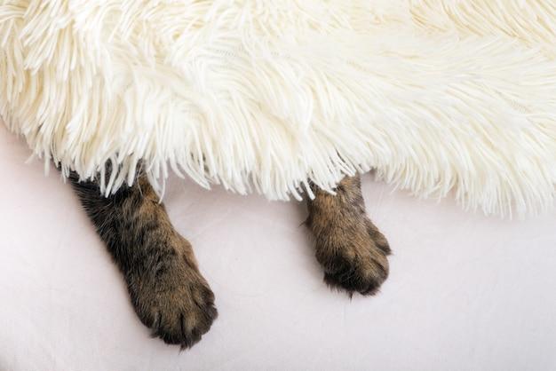 Katzenpfoten, die aus weißer felldecke herausschauen