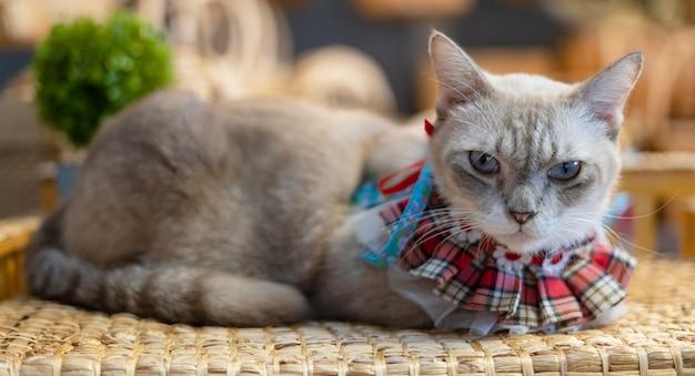 Katzenporträt, das zu hause auf tisch liegt