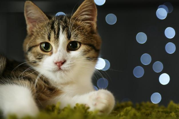 Katzenportrait mit bokeh-lichtern