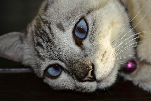 Katzenrest, der auf dem sofa schaut nett liegt