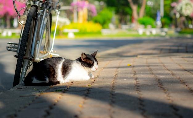 Katzenschlaf mit fahrrad.