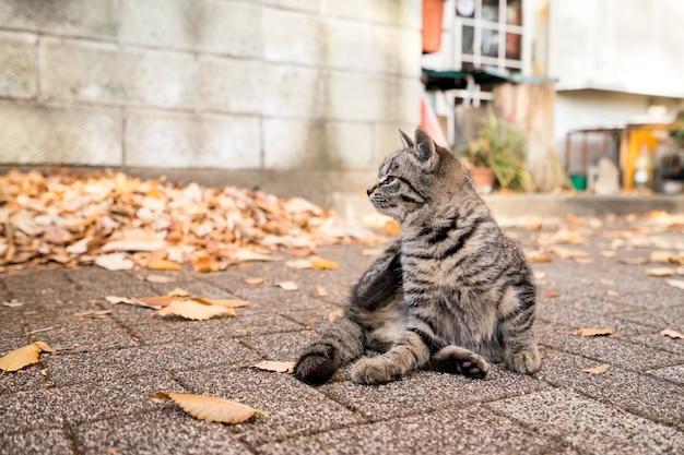 Katzentier auf der straße