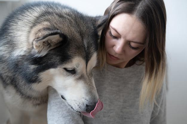 Kaukasische attraktive frau alaskische malamute-hundekopf auf schulter. innen.