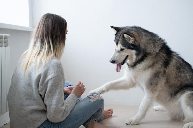 Kaukasische frau, die alaskischen malamute-hund ausbildet