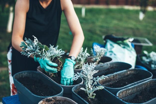 Kaukasische frau, die pflanzen in töpfen zu hause mit handschuhen während der arbeit im hof pflanzt