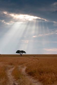 Kenia-grasland