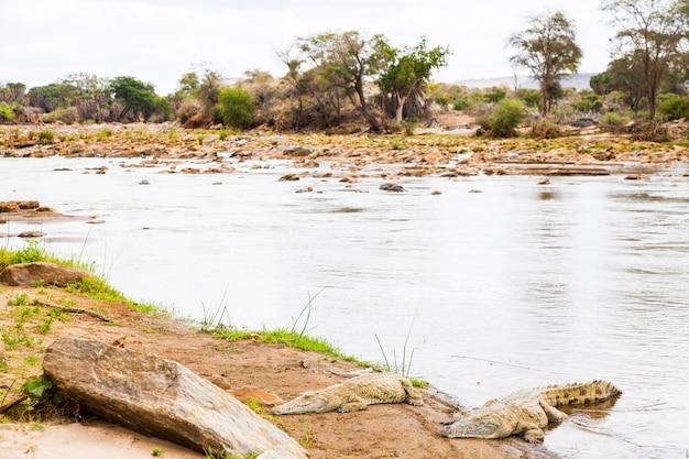 Kenia, tsavo-ost-nationalpark. krokodile bei der letzten sonne vor dem sonnenuntergang