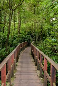 Kew mae pan nature trail wanderweg, der durch dschungelhintergrund führt