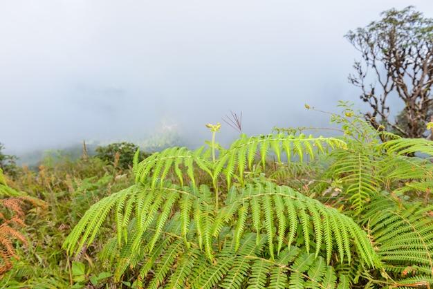 Kew mae pan nature trail wanderweg durch den dschungel