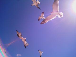 Key west, florida vögel