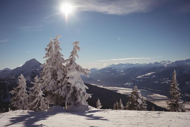 Kiefer mit schnee im winter bedeckt