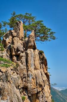 Kiefer und felsklippe, seoraksan nationalpark, südkorea