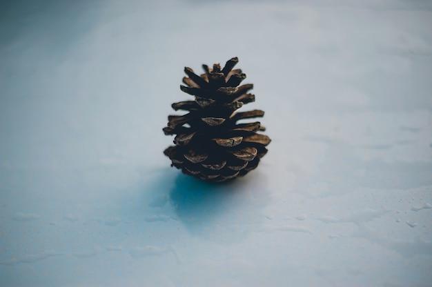 Kiefer und kiefer kommt in den bergen während der kalten winterbäume vor. und die kiefer ist trocken.