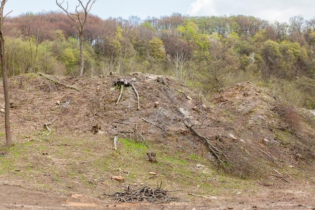 Kieferforstwirtschaftsausnutzung an einem sonnigen tag. baumstümpfe und protokolle zeigen, dass die übernutzung zu einer gefährdung der umwelt und der nachhaltigkeit durch abholzung führt