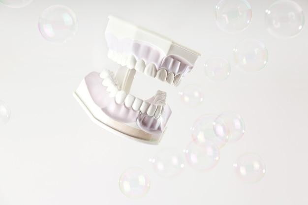 Kiefermodell mit weißen zähnen unter seifenblasen auf hellem hintergrund