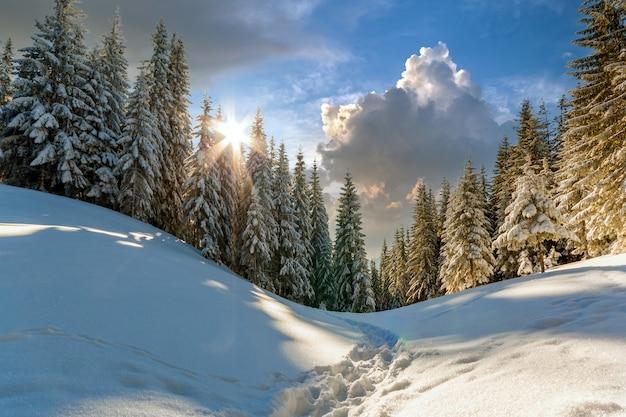 Kiefern in den bergen im sonnigen wintertag