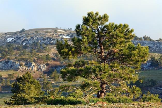 Kiefernnadelbaum auf frühlingsgebirgshintergrund
