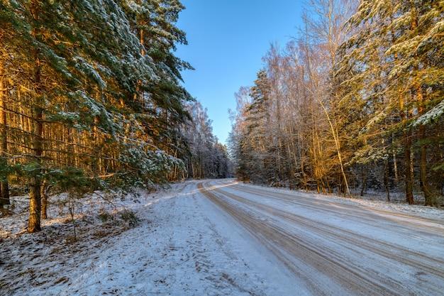 Kiefernwald, sonniger wintertag. die straße führt durch den wald