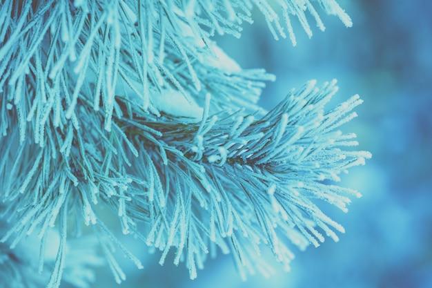 Kiefernzweige bedeckt mit raureif natürlicher winterhintergrund