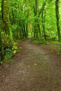 Killarney park waldweg hdr üppigen