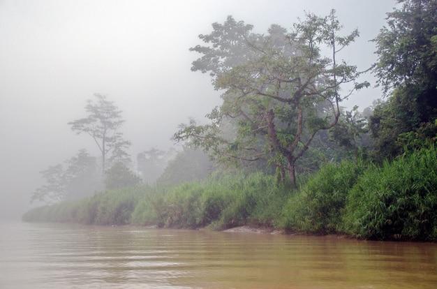 Kinabatangan fluss, borneo, malaysia