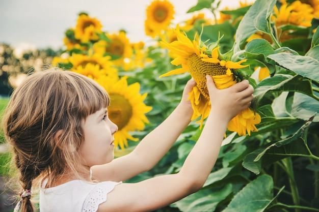 Kind auf dem gebiet der sonnenblumen ist ein kleiner bauer. selektiver fokus.