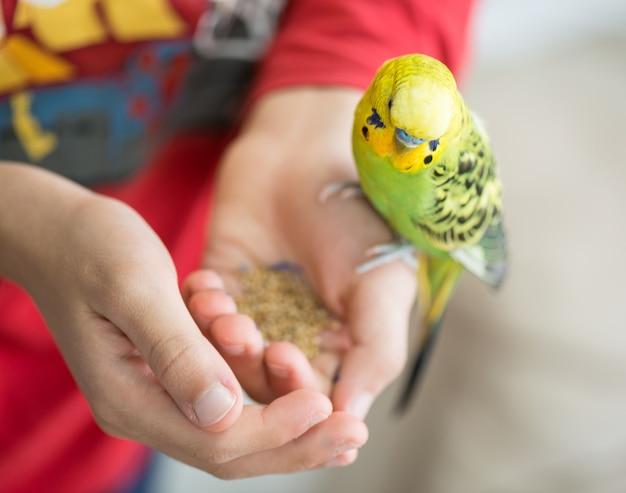 Kind, das mit seinem haustierpapageien spielt und es einzieht