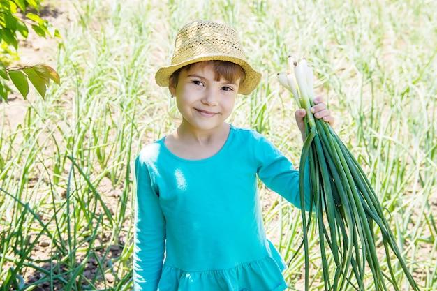 Kind hält einen jungen grünen bogen. selektiver fokus.