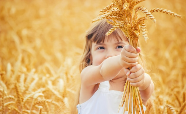 Kind in einem weizenfeld. selektiver fokus.