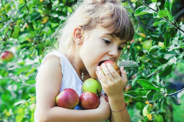 Kind mit äpfeln im sommergarten. selektiver fokus.