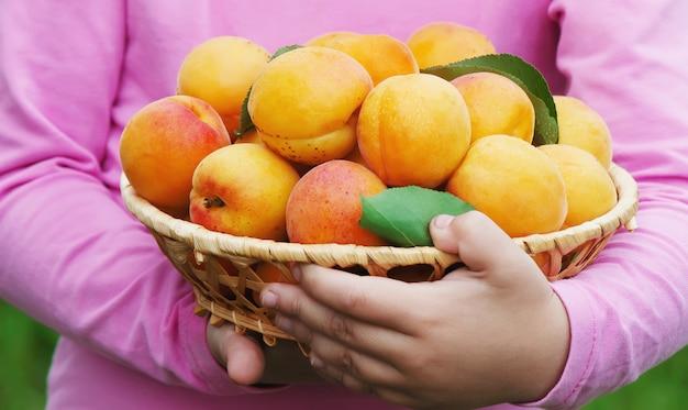 Kind mit aprikosen