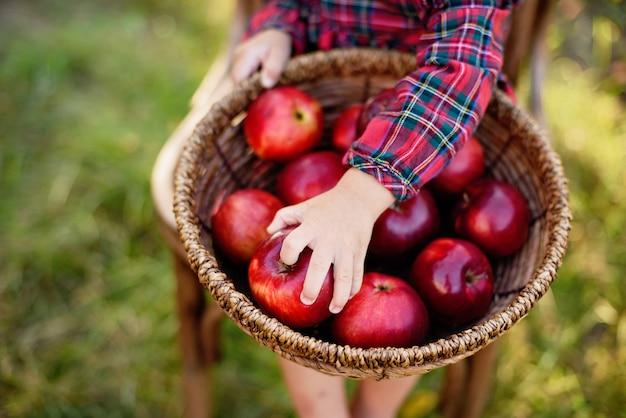 Kind pflückt äpfel auf bauernhof im herbst