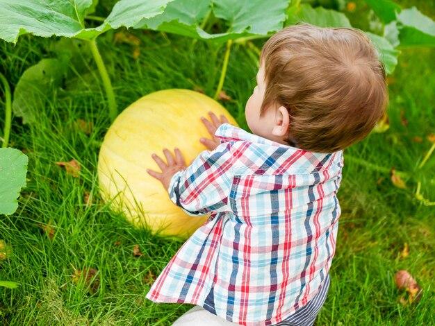 Kind spielt mit einem kürbis. ein wunderbarer kleiner junge saß mit einem großen kürbis. kinder feiern halloween. junger bauer. junger kürbis