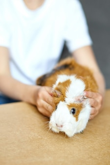 Kind spielt mit meerschweinchen, quarantänezeit kind zu hause bleiben.