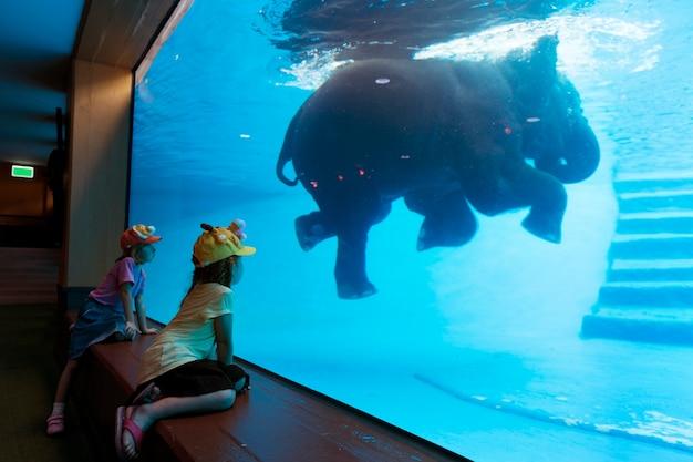 Kinder, die das aufpassen des elefanten genießen, schwimmen im wasserbecken