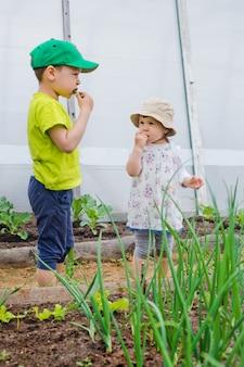 Kinder essen aus dem garten