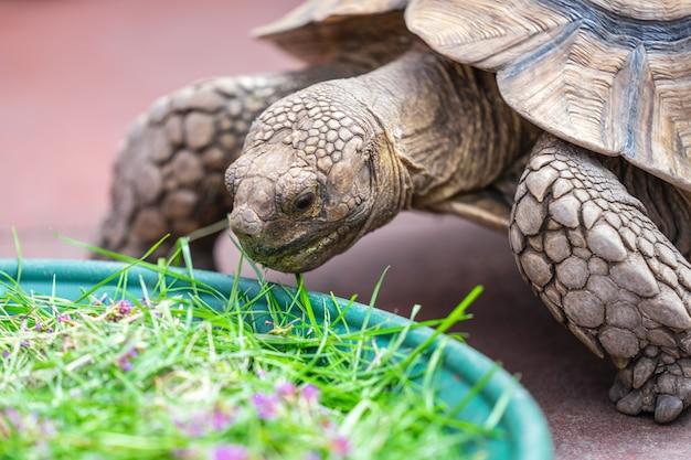 Kinder füttern schildkröte in edinburgh butterfly und insect world.ausgewählter fokus